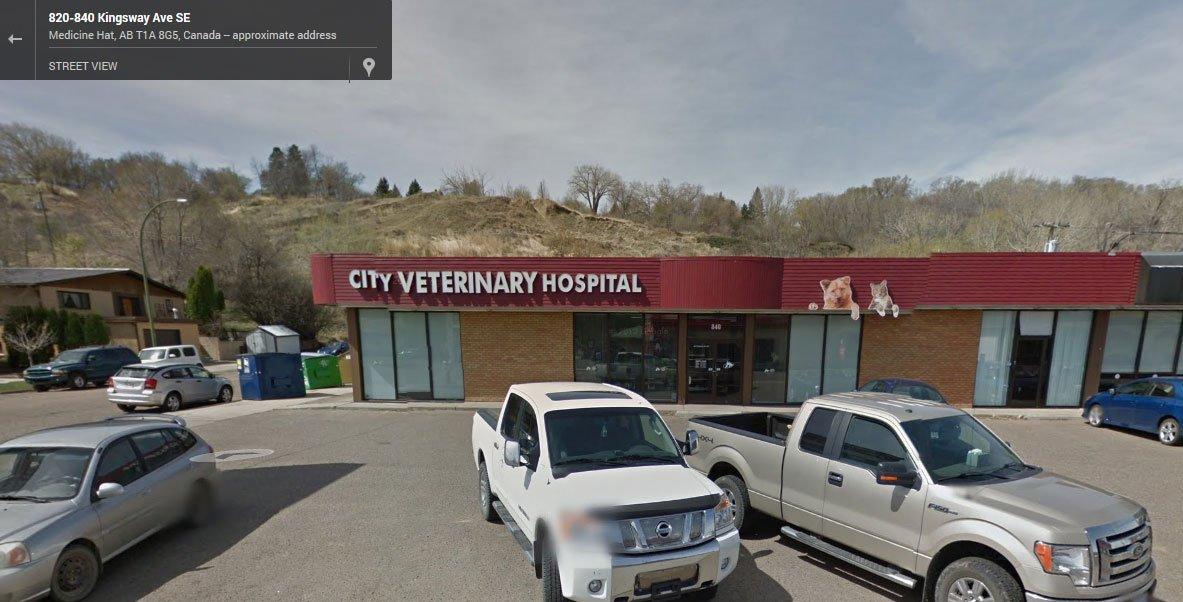city-veterinary-hospital.jpg