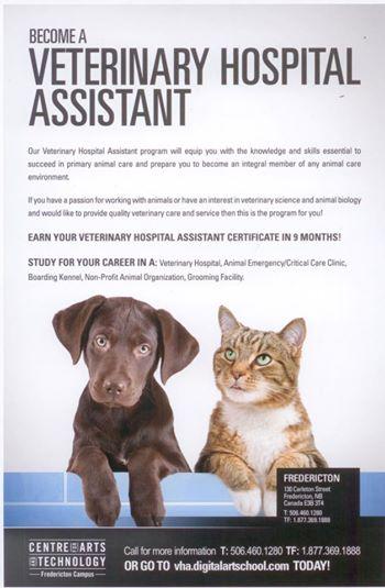 veterinary-hospital-assistant-thx-to-Denis.jpg