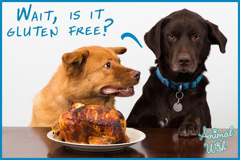 wait-is-it-gluten-free.jpg