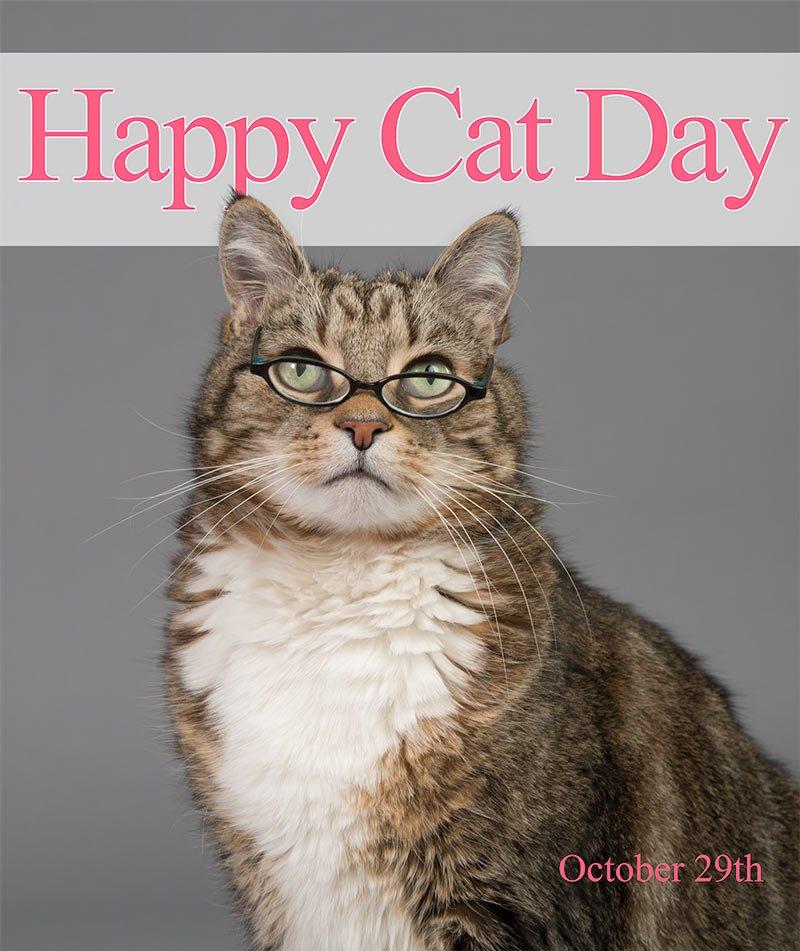 Happy Cat Day - free image